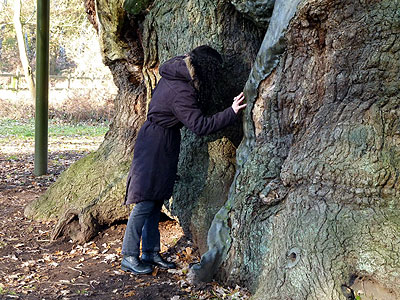 Kim investigates the Major Oak