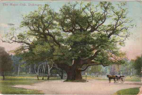 Postcard Image Major Oak.