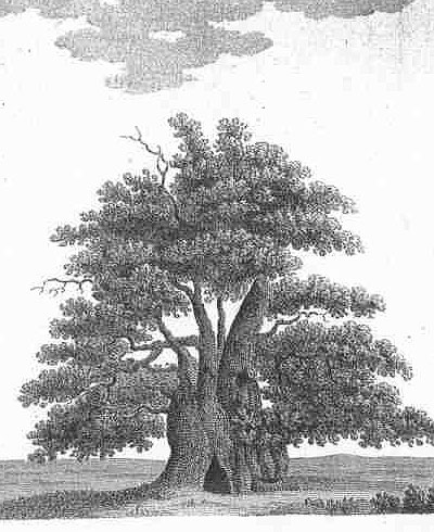 Engraving Major Oak Reversed